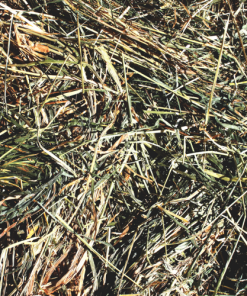 Sudan Grass Hay For Sale